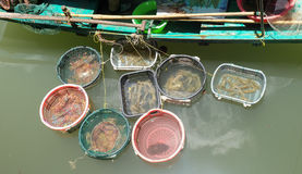 Live mantis shrimp in basket Stock Images