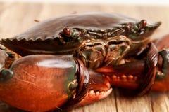 Live Mud Crab Photo stock