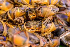 Live mud crab tied and ready for sale Royalty Free Stock Photography