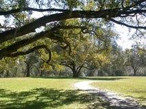 Live Oak ścieżka Fotografia Stock