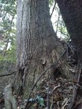Live Oak image stock