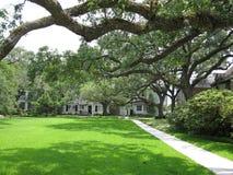 LIVE OAK COURTYARD. Beautiful Houston Live Oak branches stretch across courtyard Stock Photos