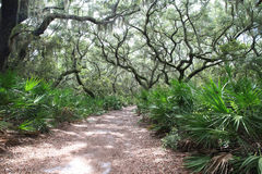 Live Oak Path. Path surrounded by Live Oak and Cabbage Palm Royalty Free Stock Photo