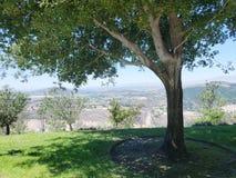 Live Oak Tree & Open Country Landscape royalty free stock image