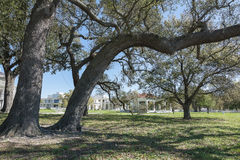 Live Oak Tree. A 300 plus year old live oak tree at Beauvoir, The Jefferson Davis Home and Presidential Library in Biloxi, Mississippi Royalty Free Stock Photography
