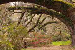 Live Oak Tree Tunnel South Carolina Royaltyfria Bilder