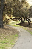 Live Oak Trees Over Walking Path. Tranquil walking path through live oak trees and park setting perfect for summer time stroll, walk after family BBQ, biking stock photography