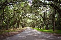 Live Oak underland royaltyfri fotografi