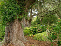 Live Oaks Garden Royalty Free Stock Photography
