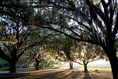 Live Oaks and Spanish Moss Stock Images