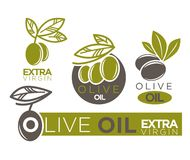 Live olive oil extra virgin flat logotypes on white. Vector. Illustration of company labels green and dark olivic berries with leaves near inscriptions. Healthy royalty free illustration