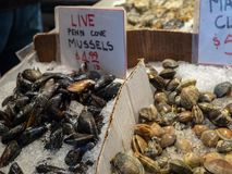 Live penn cove mussels for sale in ice at fish market stock image
