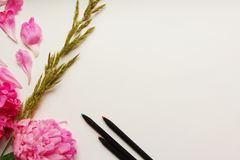 Live peonies on a white letter. Live peonies and pencils on a white background Stock Photos