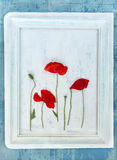 Live poppies in the frame. vintage Royalty Free Stock Images