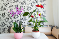 Live potted plants in pots at  interior Stock Photography