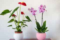 Live potted plants in pots at  interior Royalty Free Stock Photography