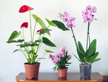Live potted plants in pots at  interior Royalty Free Stock Photos