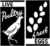 Live Poultry Royalty Free Stock Photo