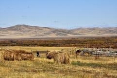 Live on the prairie. Gen he wet land ,hulun buir prairie,china Royalty Free Stock Photo