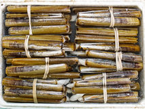 Live razor clam Stock Images