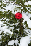 Live Real Christmas Tree, Sneeuw, Enige Rode Ornamentdecoratie Stock Fotografie