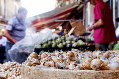 A live snail, a delicacy on street trading Stock Images