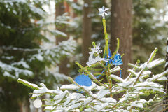 Live spruce tree in snowy wood decorated with Stock Photo