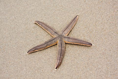 Live Starfish Stock Images