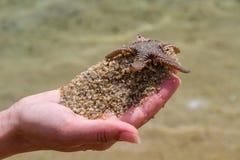 Live Starfish image stock