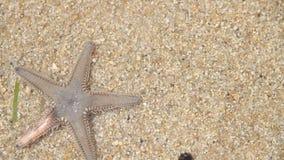 Live Starfish stock footage
