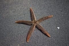 Live Starfish photographie stock
