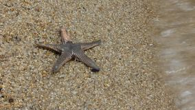 Live Starfish stock video footage