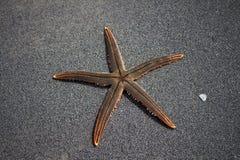 Live Starfish photos libres de droits