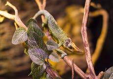 Live wild reptiles lizards shot close-up Stock Image