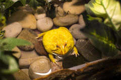 Live wild reptiles lizards. Shot close-up in nature Royalty Free Stock Photography