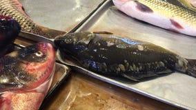Livekarpfenfische auf dem Behälter am Fischmarkt stock video