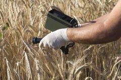 Livelli di radiazione di misurazione di frumento Fotografia Stock Libera da Diritti