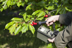 Livelli di radiazione di misurazione di frutta Fotografie Stock