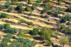 Livelli di terre coltivabili Fotografia Stock