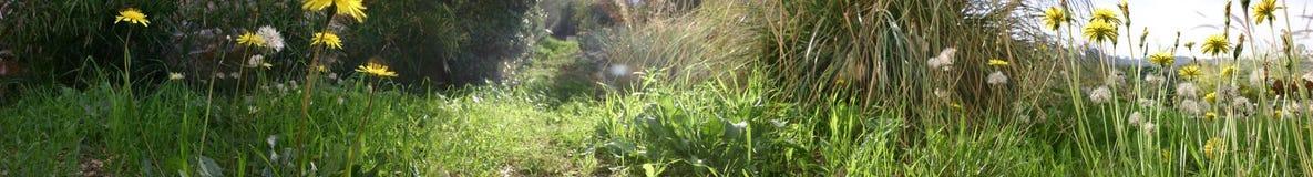 Livello del suolo Fotografia Stock Libera da Diritti