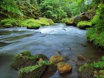 Livello dell'acqua sotto gli alberi verdi freschi al fiume della montagna Aria fresca della molla nella sera Fotografia Stock