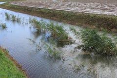 Livello dell'alta marea alla campagna nel villaggio Oudenhoor nella caduta Fotografia Stock Libera da Diritti