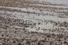 Livello dell'alta marea sul pascolo alla campagna nel villaggio Oudenhoorn nella caduta Immagine Stock