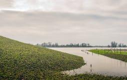 Livello dell'alta marea in un ampio fiume olandese Fotografia Stock