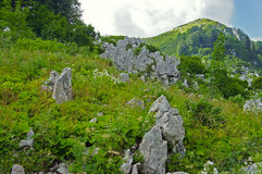 Livello nelle montagne Fotografie Stock Libere da Diritti