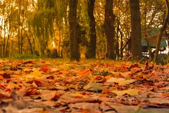 Lively closeup of falling autumn leaves with backlight from the sun stock image