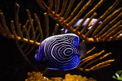 Lively colorful aquatic life in dark display aquarium royalty free stock image