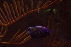 Lively colorful aquatic life in dark display aquarium royalty free stock photography