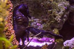 Lively colorful aquatic life in dark display aquarium Stock Photography