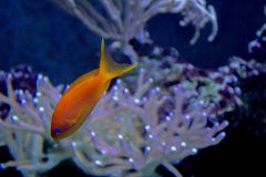 Lively colorful aquatic life in dark display aquarium Stock Photography